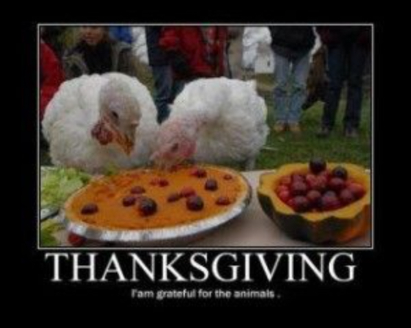 Happy thanksgiving I'm grateful for the animals